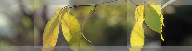 fall05-leaves.jpg