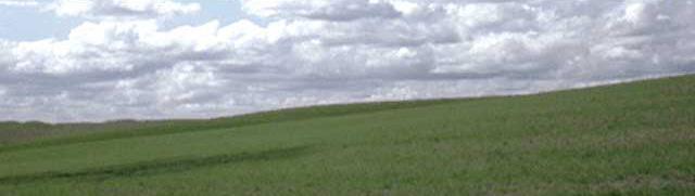fields_b.jpg