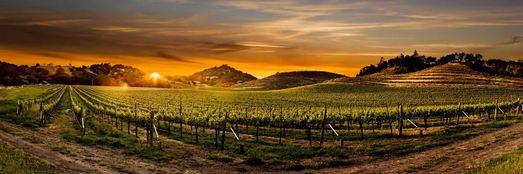 NapaValleyMarriott 2%202 Napa Valley Taste For Knowledge Wine Auction