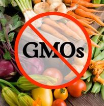 no GMO 2