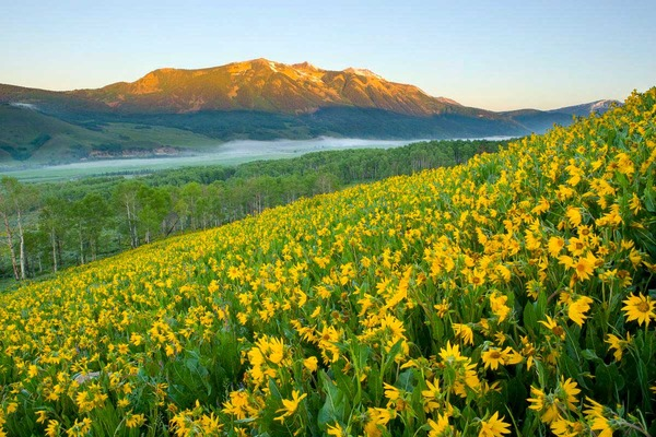 Whetstone_wildflowers_2030 3
