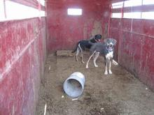 Dogs abandoned in trailer