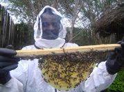beekeeper_with_comb