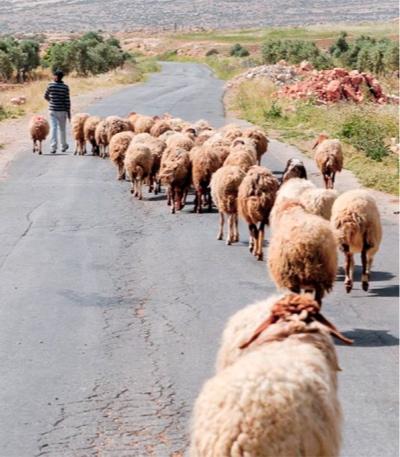 Following Shepherd