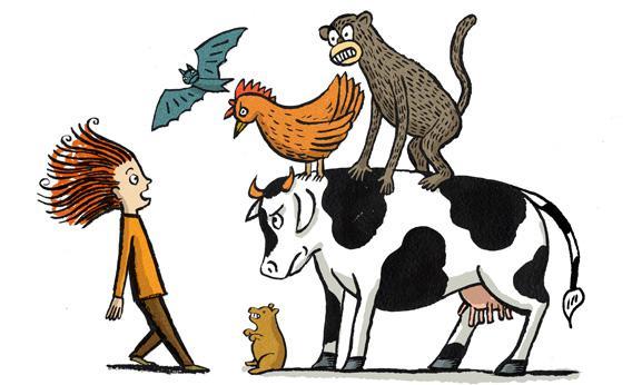 Cat Borne Disease Humans Catch