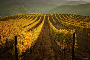 vineyard1_oneal 2