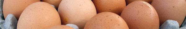 egg strip