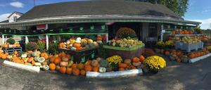 Talbotville Berry Farm 3