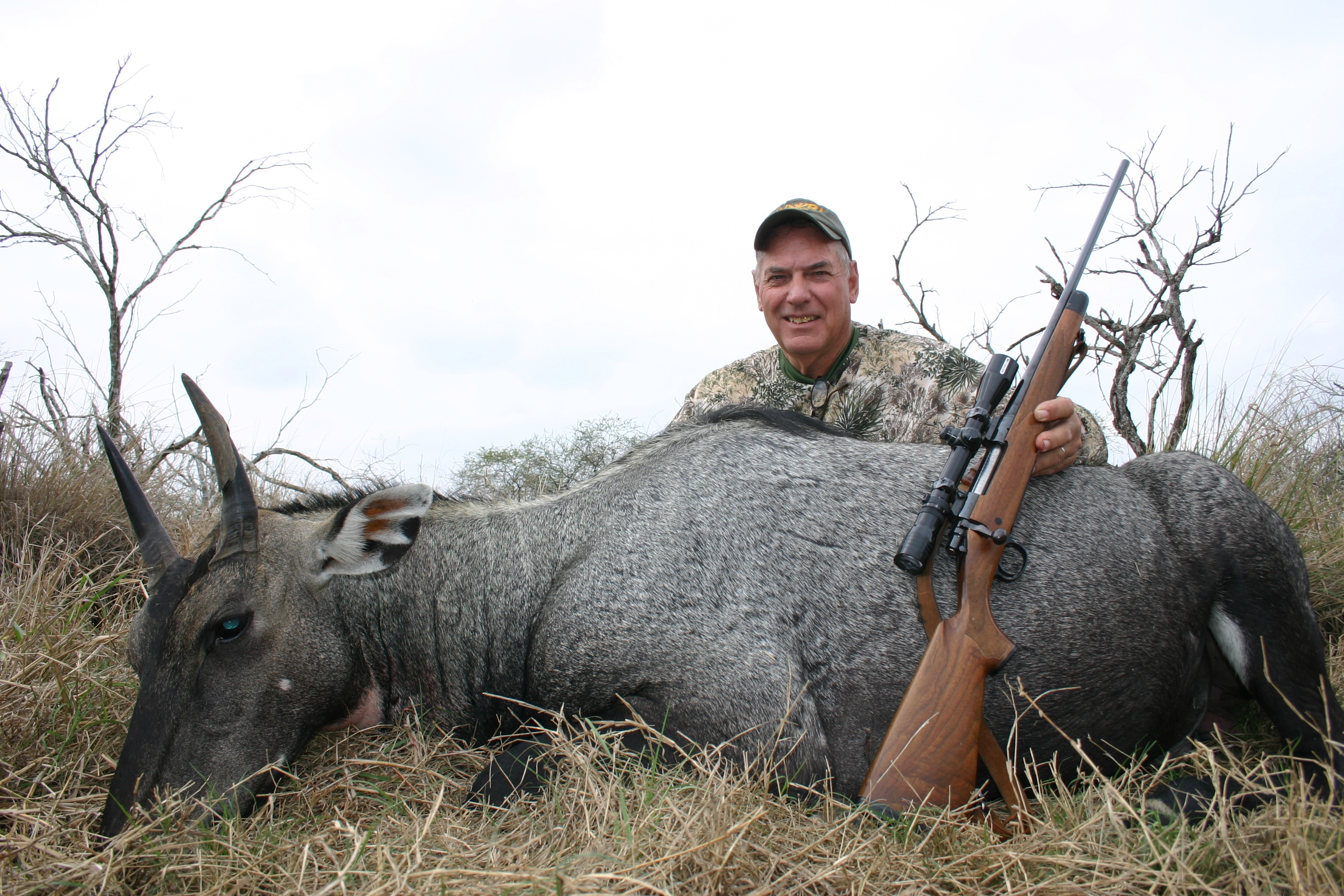 King Ranch Nilgai.JPG