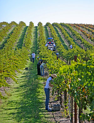 Hands-on harvest experiences, winemaker dinners in the vineyards and more