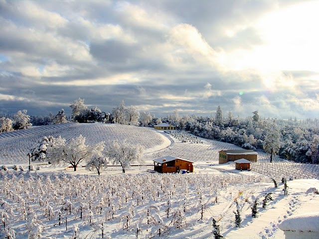 First Snow at Amador County Vineyard