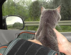 Spot on way to Atlanta for HT treatment