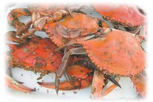 Crabs JPEG 2