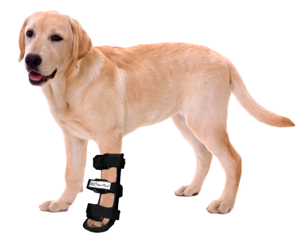 canine splints from HandicappedPets.com