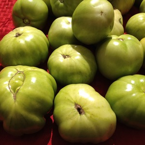 greentomatoes