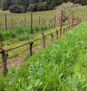 2012%20Cover%20Crop%20Mountains Fisher Vineyards Update
