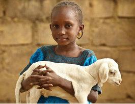 Girl holding                             baby lamb