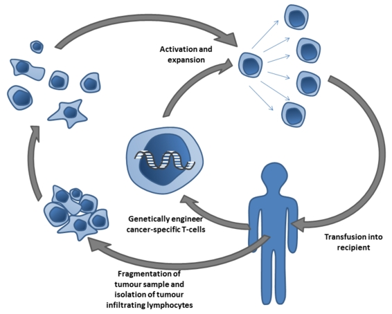 Adoptive_T-cell_therapy Simon Caulton CC BY-SA 3.0