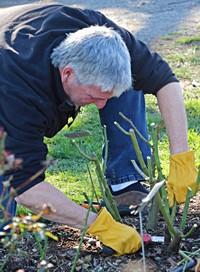 Pruning Class 15 MK IMG_0076 200x272