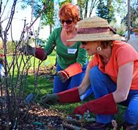 Pruning Class 15 Maidens MK IMG_0038