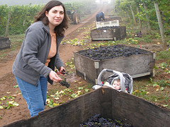 Delphine_checking_harvest