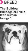 eNewsCarousel_bulldog.jpg