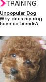 eNews_unpopular-dog.jpg