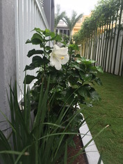 casagrandeflower