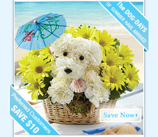 Flowers From Only $19.99! Voted Best Value! Order now and SAVE $10