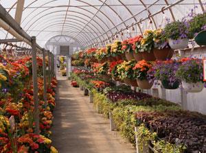 garden-center