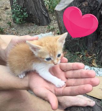 macedonia kitten