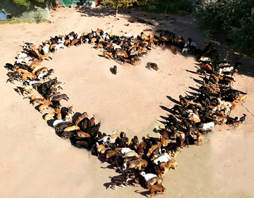 Heart of Dogs