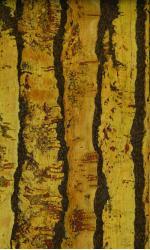narrow plank serra