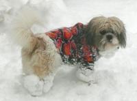 Mack loving the snow small.jpg