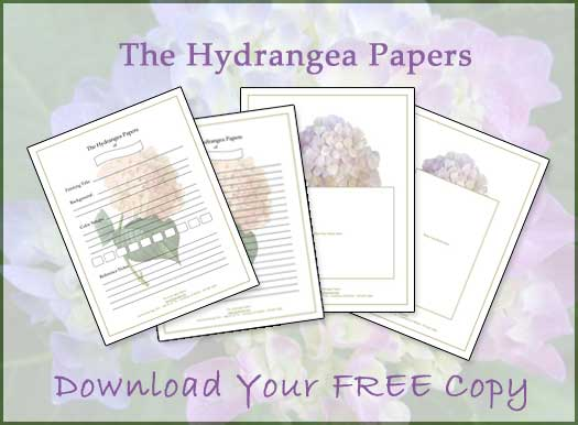 Hydrangea Papers Compliments of Rosecote.com