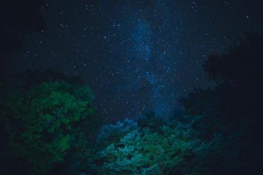 starry-night-sky-from-below-trees_925x 2