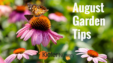 August-Garden-Tips-Thumbnail