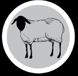 SheepStamp 5