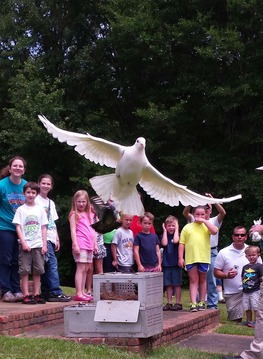 Homing Pigeons at Animal Adventures at Landmark Park