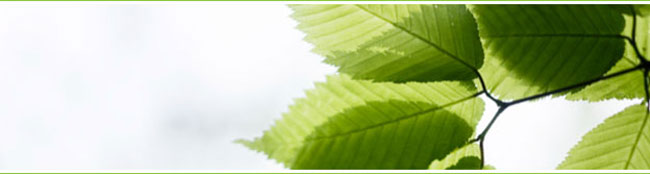 green-leaves-m.jpg