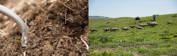 Soil not Oil Landscape
