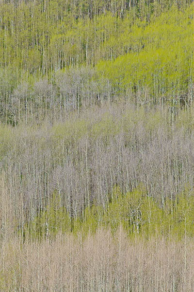 Layers_of_Spring-3