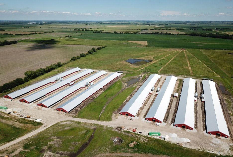 Chicken barns