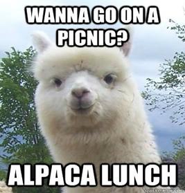 AlpacaLunch