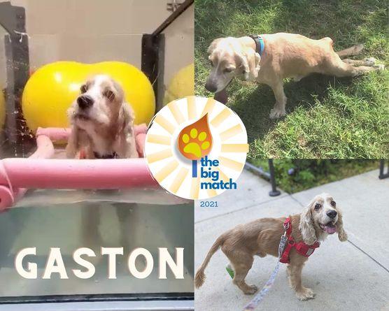 Gaston Big Matchv2