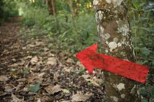 IMG_4964_Red_arrow_Brackenhurst_forest